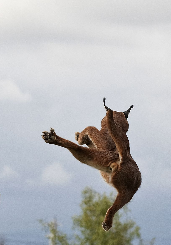 10. jump by doug fitz-gerald