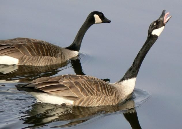 2. Wild Goose