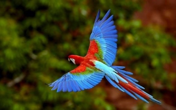 3. Parrot