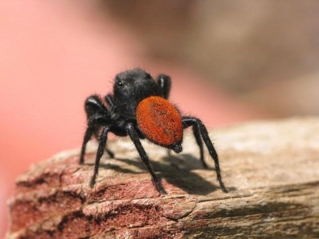 Stalker / Spider-horse