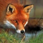 10 Innocent Looking Animals who are Actually Most Dangerous Creatures