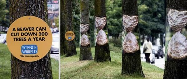 A Beaver can cut down 200 trees a year