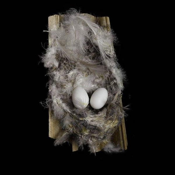 The Fragile Beauty of Birds' Nests by Sharon Beals
