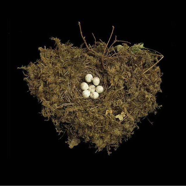 Photos of Birds' Nests