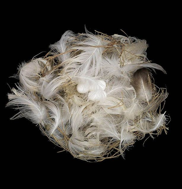 Amazing Bird Nests Pictures by Sharon Beals