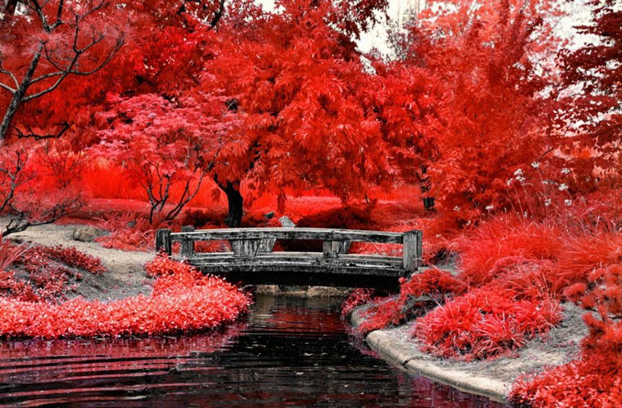 Awesome Infrared Photography by Helios