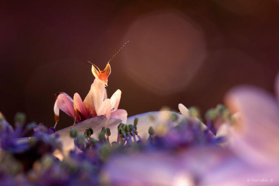 12. like a flower