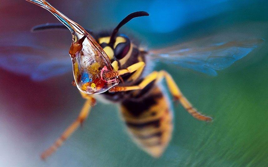 wasp picture took by macro photographer Irina Kozorog