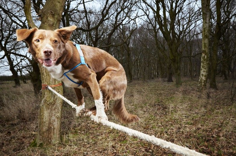 zzy Named Fastest Tightrope Walking Dog In Guinness Book Of World Records 2014