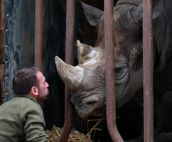 Rhino rehoused