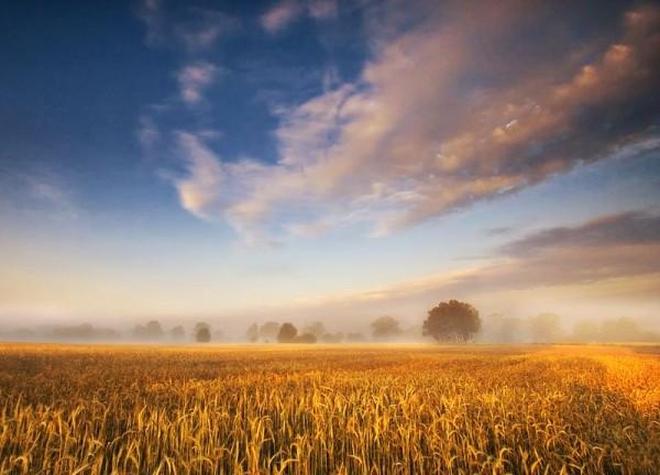 Polish fields