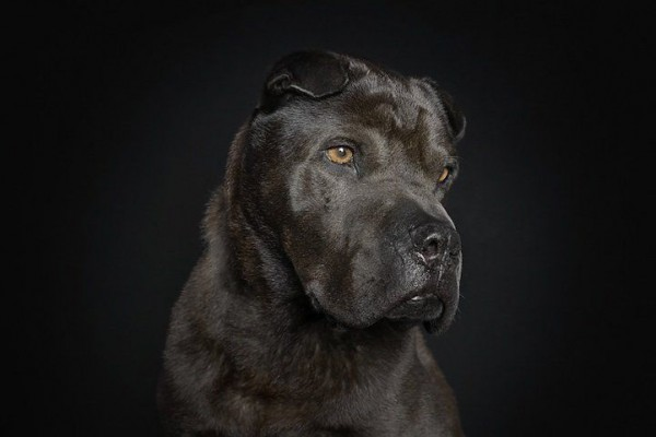 Portraits of Dogs by Ralph Hargarten