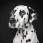 Incredible Portraits of Dogs with Hilarious Face Expressions