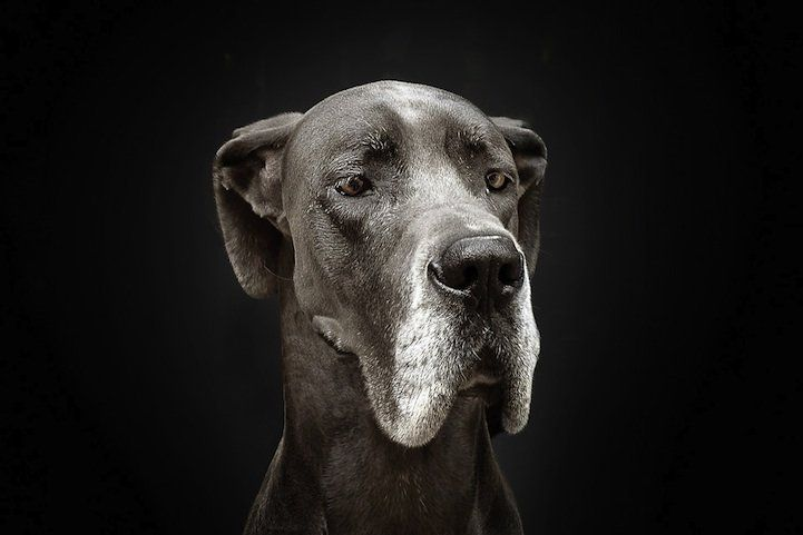Dogs with Human Emotions