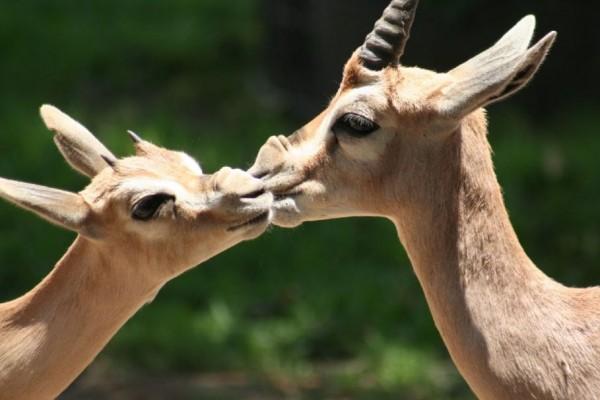 14. Animal Kiss