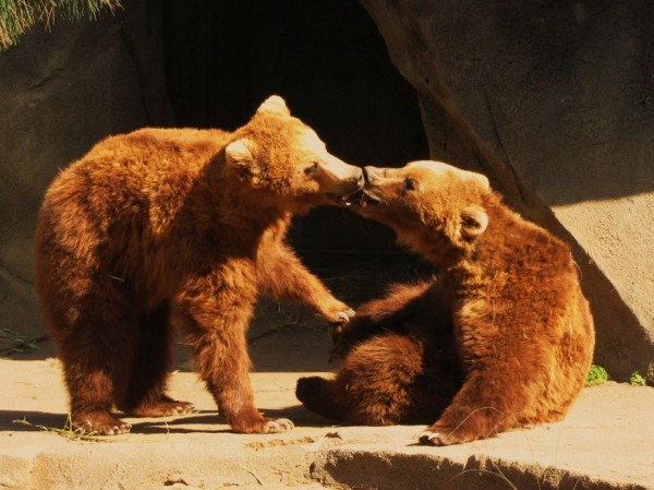 15. Bear Kiss
