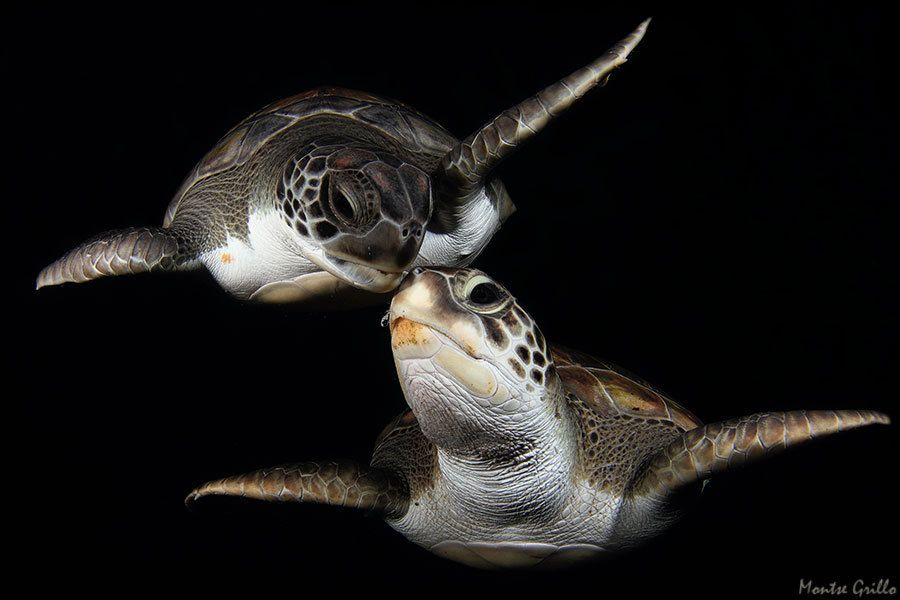 4. Turtle Kiss