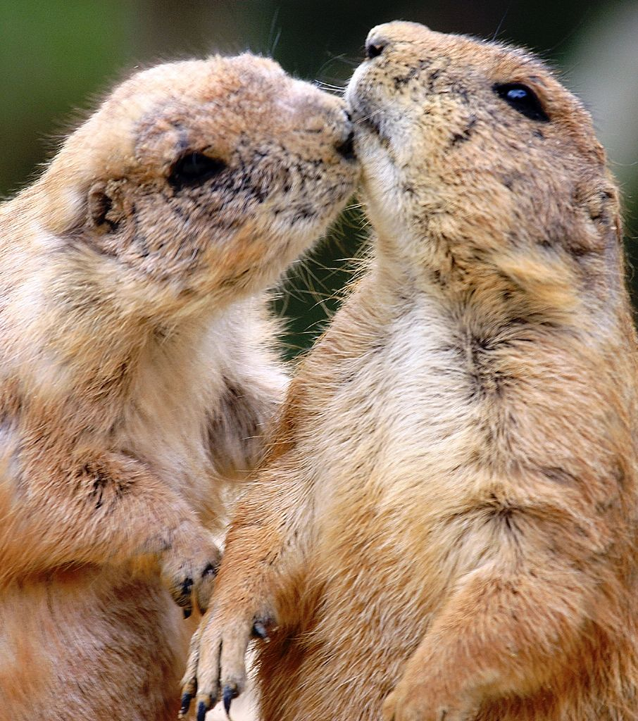 The 30 Most Adorable Animal Kisses Ever Seen - The Wondrous