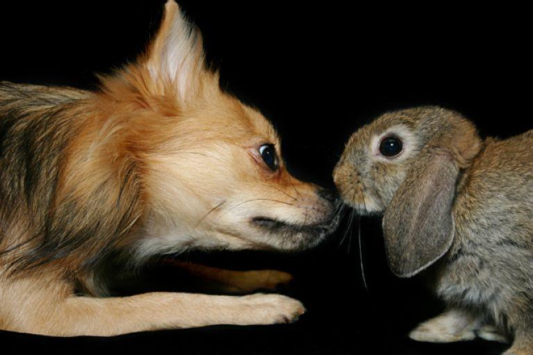 7. Dog Lana giving the family bunny a kiss