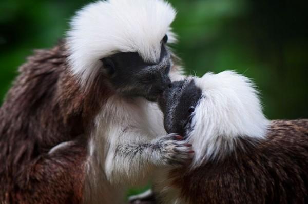 9. Monkey kisses