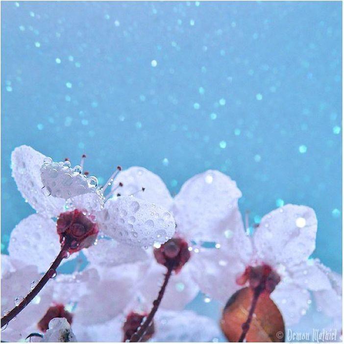 Macro Views of Dewdrops by Demon Mathiel