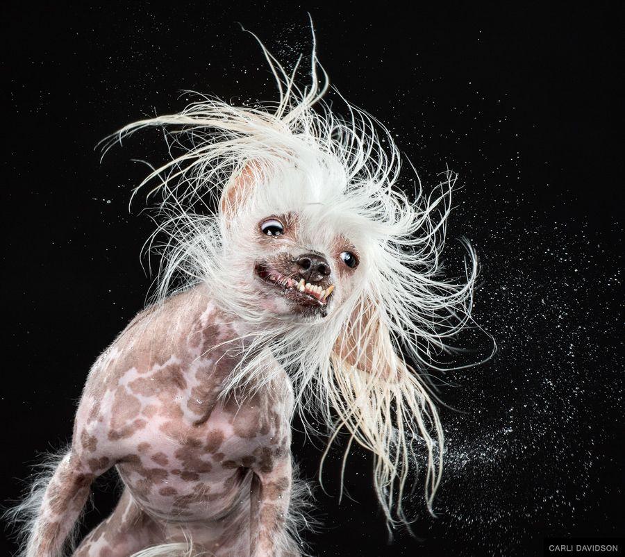 Hilarious Shake Photo Series by Carli Davidson
