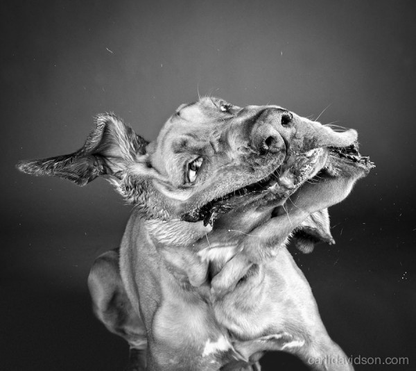 Shaking Photos of Dogs