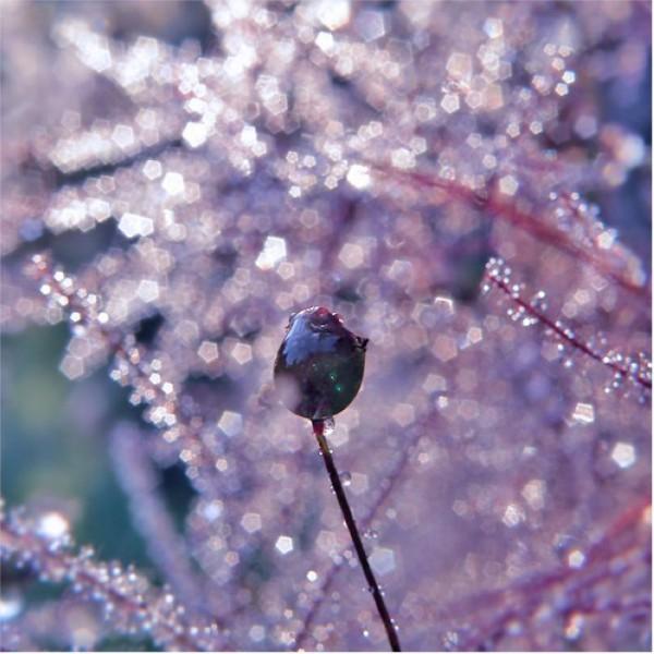 Frosty Pink July