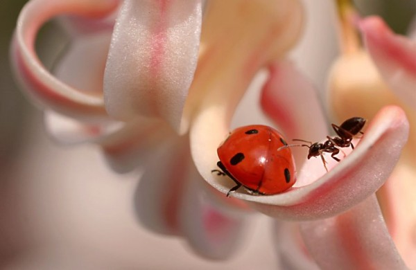 Ladybugs Photography