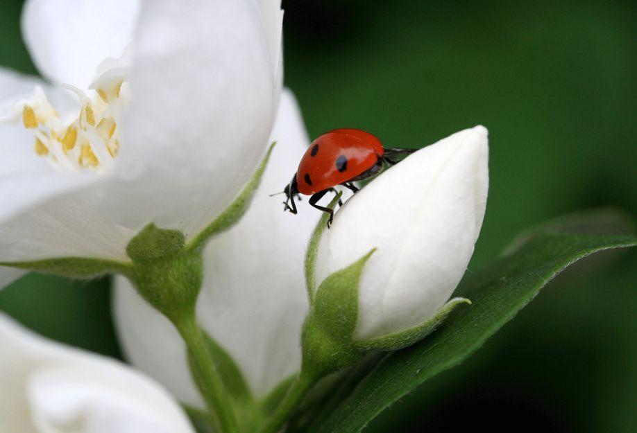Ladybugs Photography