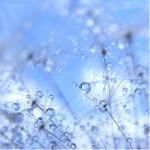 Stunning Macro Views of Dewdrops by Demon Mathiel