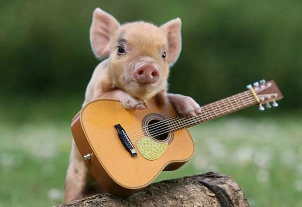 Tiny Pig, Tiny Guitar, Tiny Log