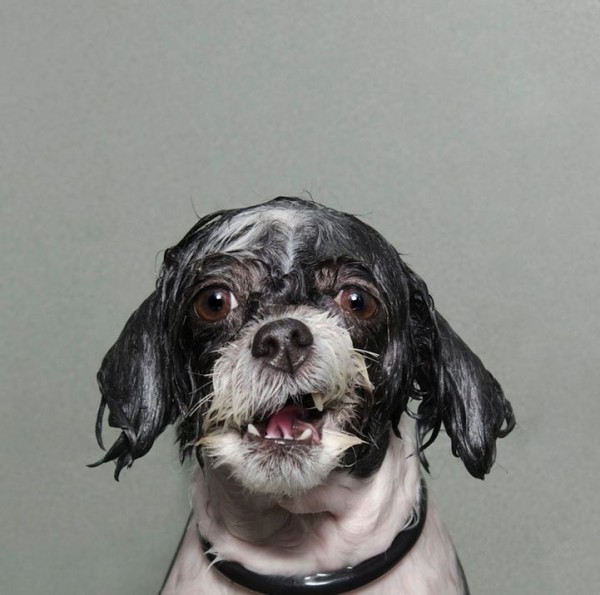 Excellent Wet Dogs Photography by Sophie Gamand