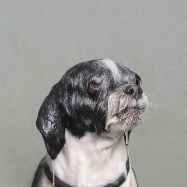 Amazing Wet Dog Photo Series