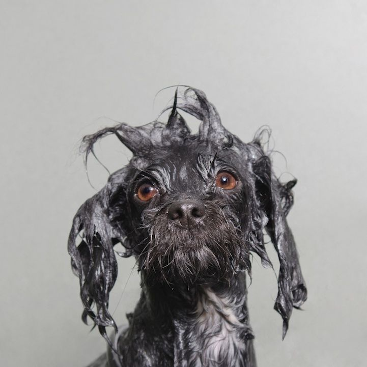 Adorable Portraits of Wet Dogs by Sophie Gamand