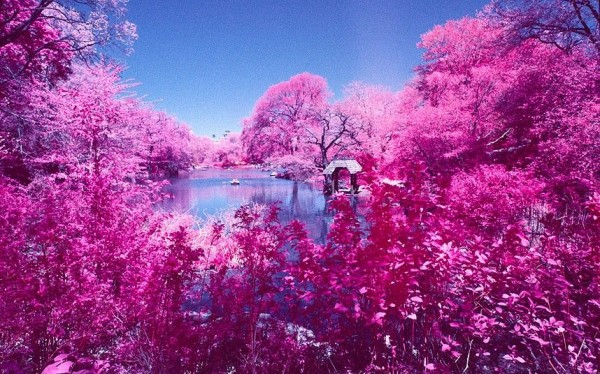 Amazing View of Central Park