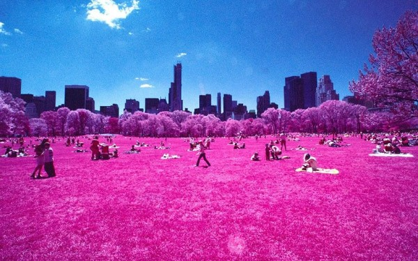 Awesome landscape of Central Park in New York
