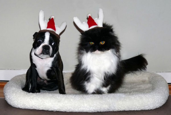 Cutest Christmas Dogs