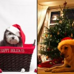 40 Cutest Pictures of Christmas Dogs