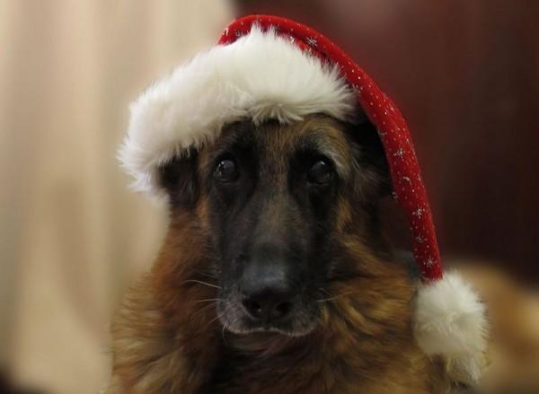 Cutest Christmas Dogs