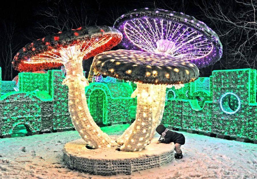 The Lights of Big Holidays: Majestic Christmas Lights 2013