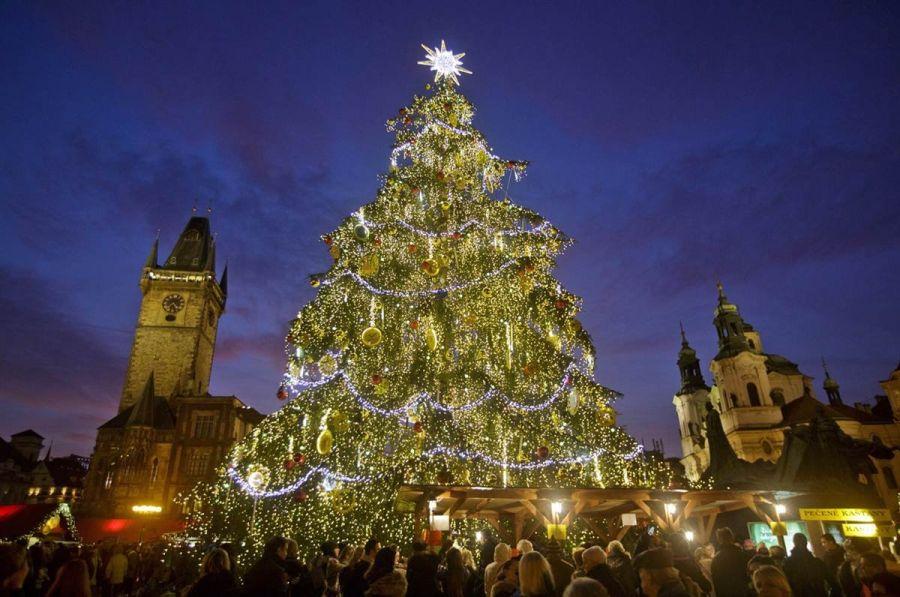 Main tree of the Czech Republic in Prague