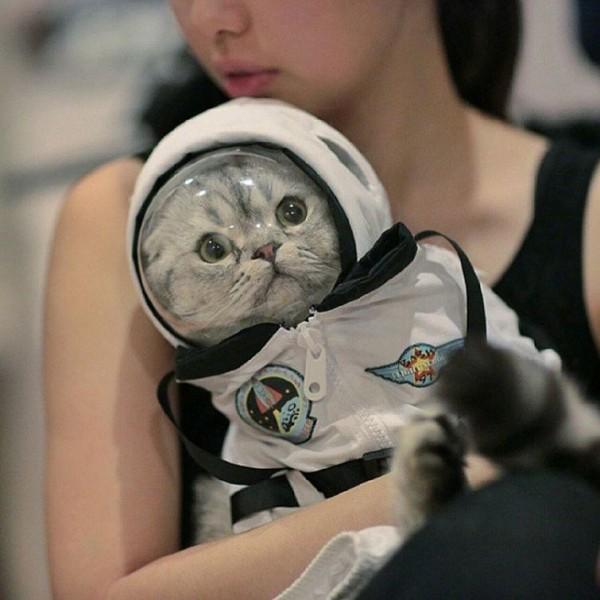 Portraits of Kittens