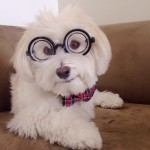 35 Endearing Portraits of Animals on Instagram