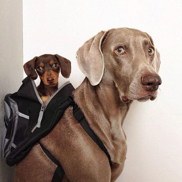 Portraits of Dog