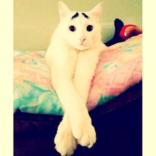 Portraits of Cats