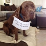 50 Guilty Dogs With Written Signs On What They Did is Wrong