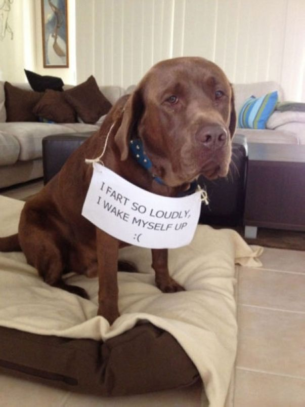 50 guilty dogs with written signs on what they did is wrong the
