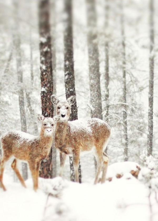 Amazing Enchanting Winter Landscapes