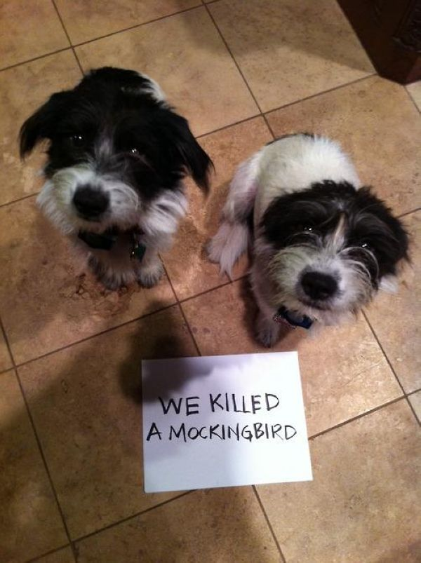 Guilty Dogs With Written Signs On What They Did Is Wrong The - 26 funny photos of guilty dogs